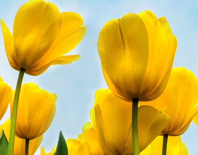 U proleće sve RASTE - samo naše CENE OPADAJU!